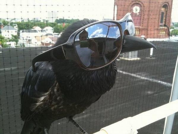 Fashion-crow.jpg