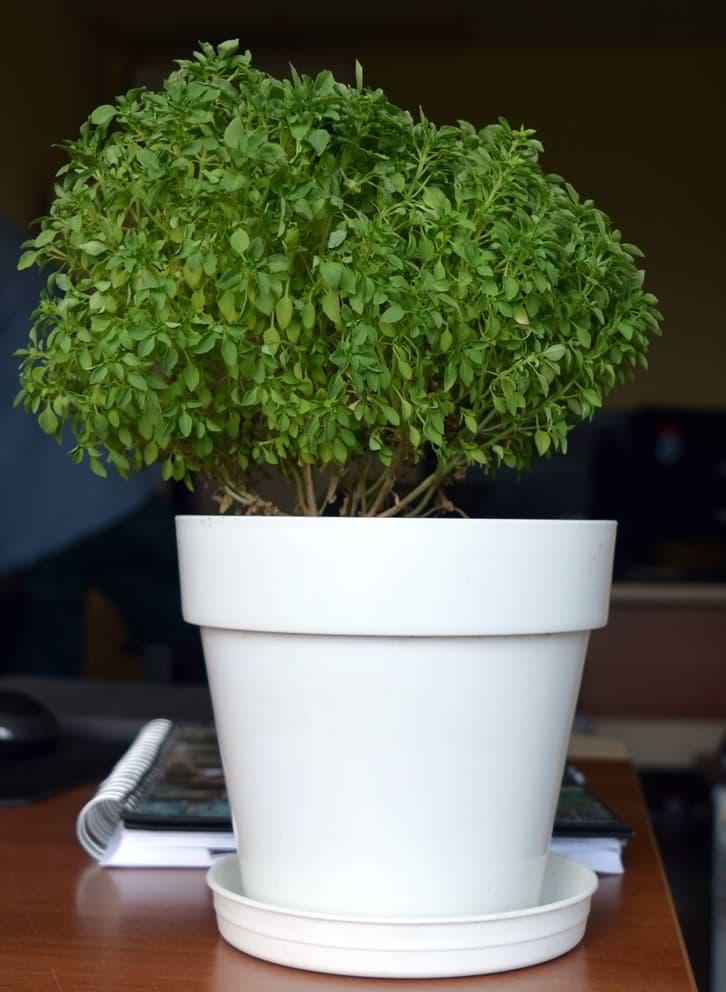scp-4915-plant.jpg