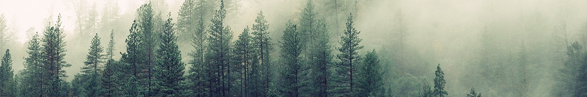 forestsmall.jpg