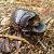 Beetle.png