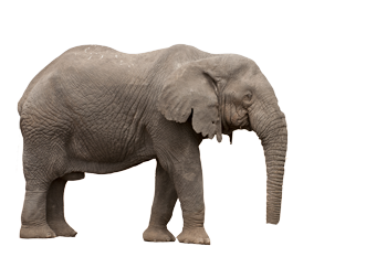 Elephant-3.png