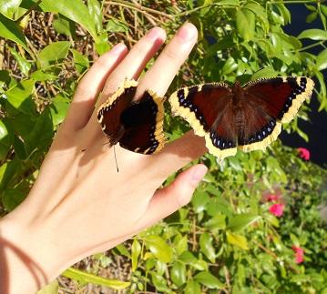 zynbutterflies.jpg