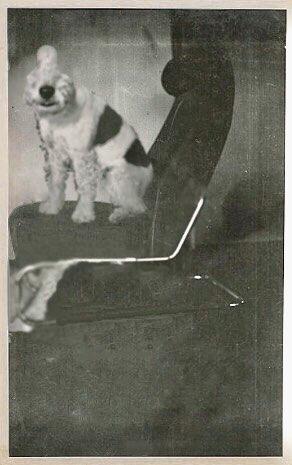 1929-new.jpg