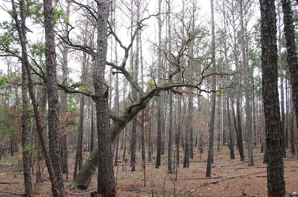 Forest.jpg