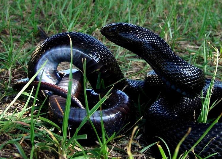 snakes.jpg.jpg