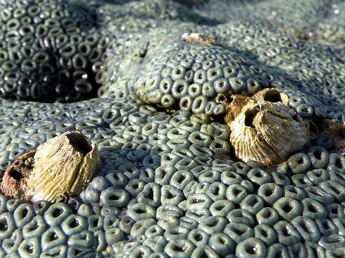 barnacles.png