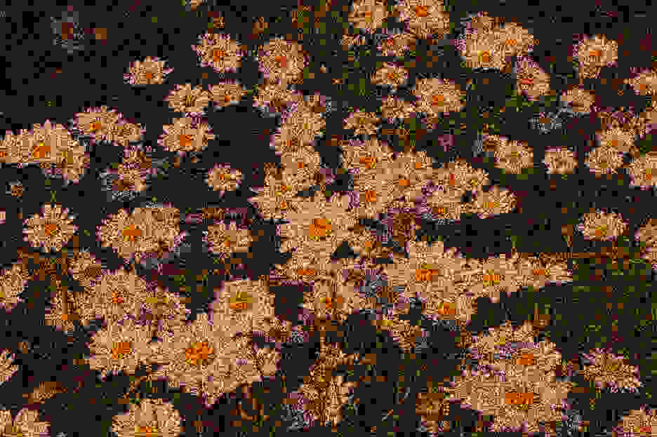 ModifiedDaisiesGrainy.png