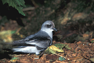 SCP-3497-bird.jpg