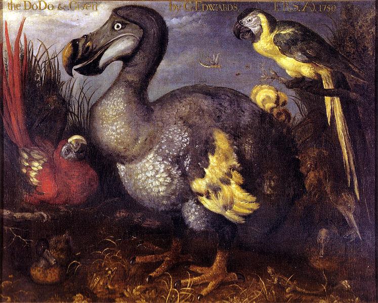 dodo.jpg