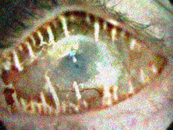 EyeScream.jpg