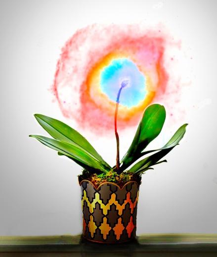 Plant%20Nebula.jpeg