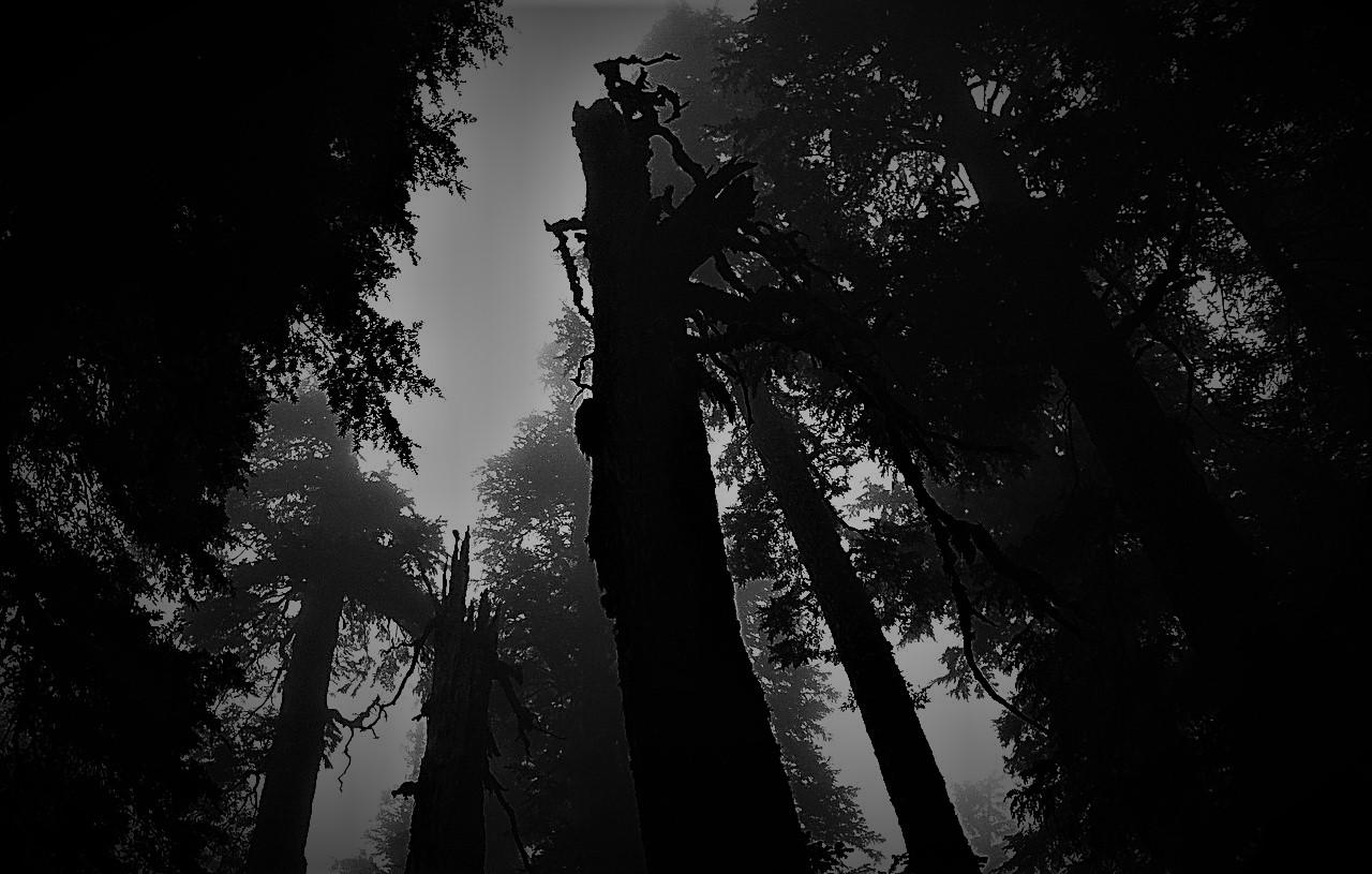 Deadtree.jpg