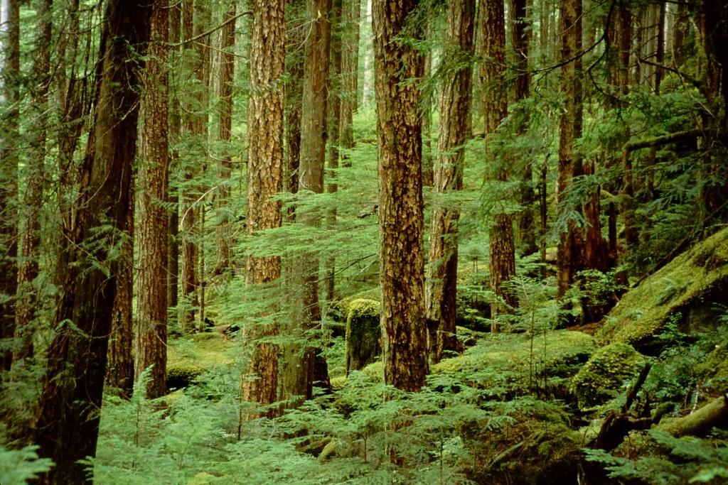 forestreserve