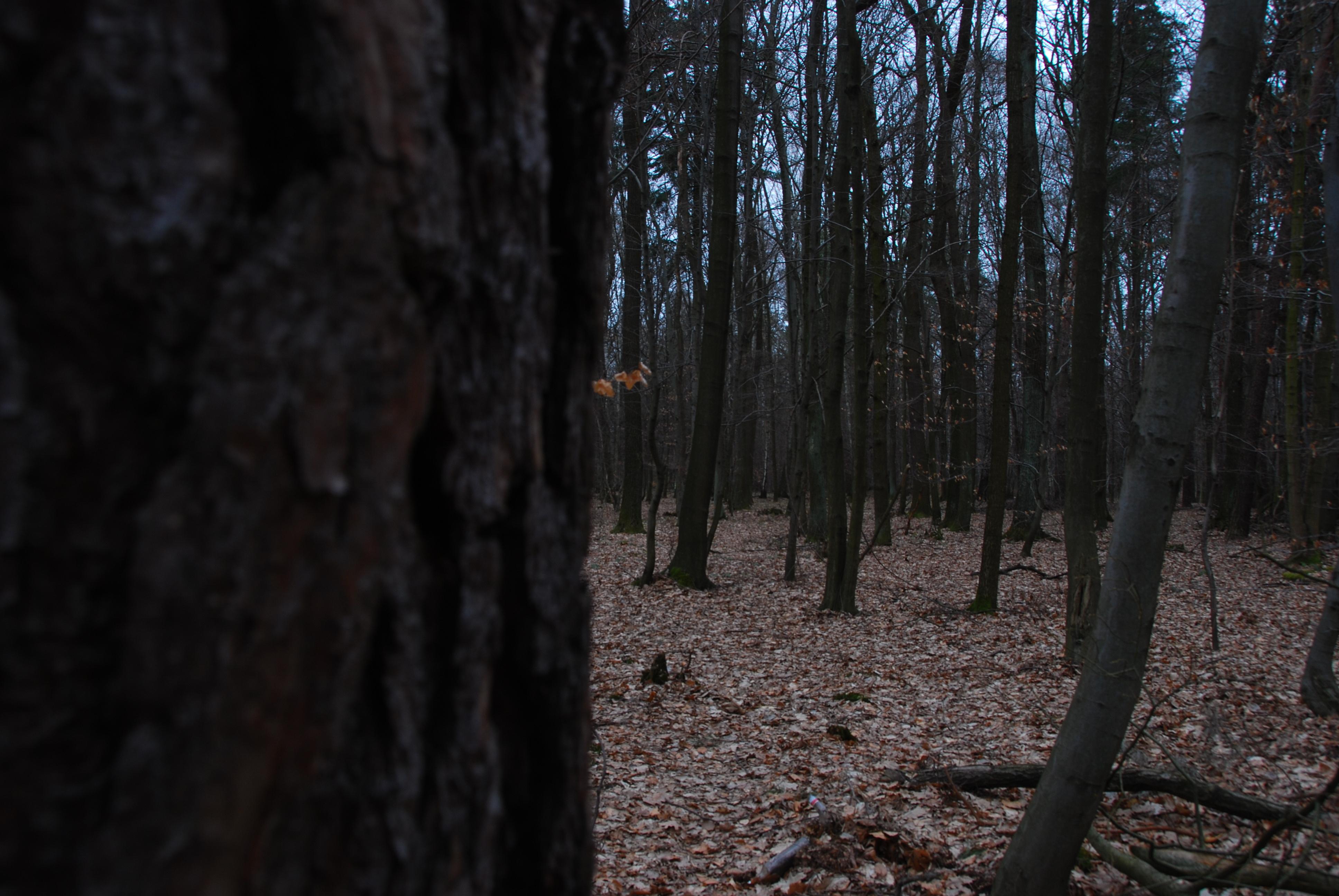 Dark_Forest.jpg