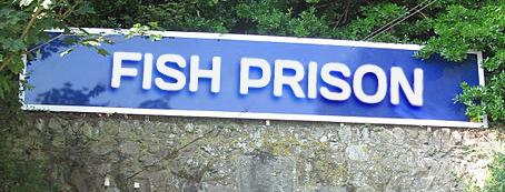 fishprison.png
