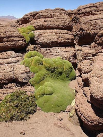 Rock_Coral_1.jpg