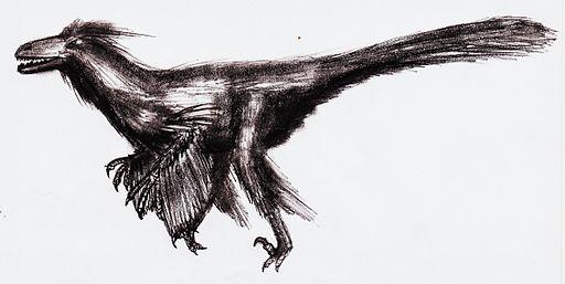 Utahraptor.jpg