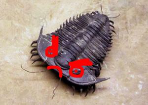 trilobite_evil_1_small.jpg