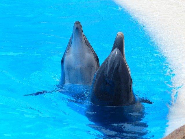 bottlenose-dolphins.jpg