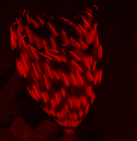 louise-murray-indian-tubeworm-or-feather-duster-worm-is-a-filter-feeding-polychaete-annelid-new.png