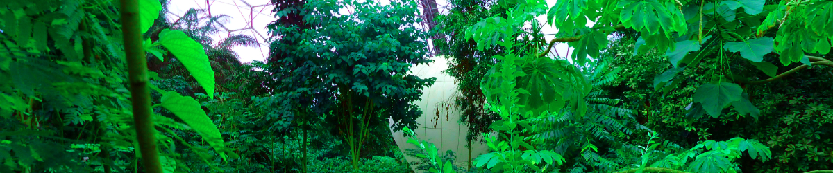site-82-garden.jpg