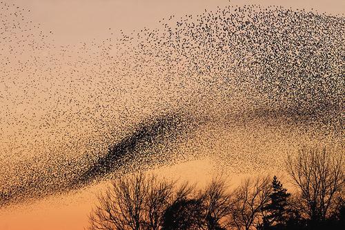 swarmm