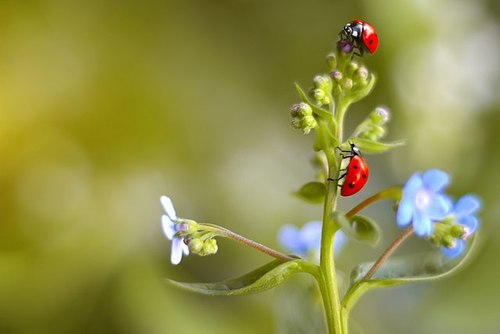 Ladybugs.jpeg